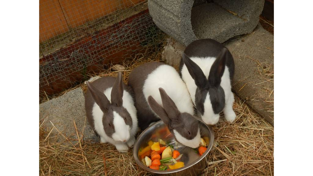Giulia, Sunny und Leonie
