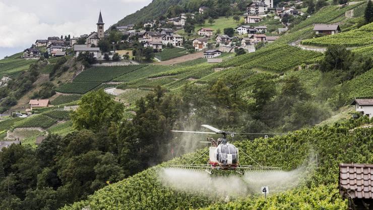 Weinbauer und Bundesrat Guy Parmelin hat bei der ETH interveniert. Pestizideinsatz bei Flanthey VS