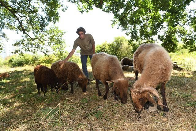 Florian Neumann mit seinen Schafen in Therwil