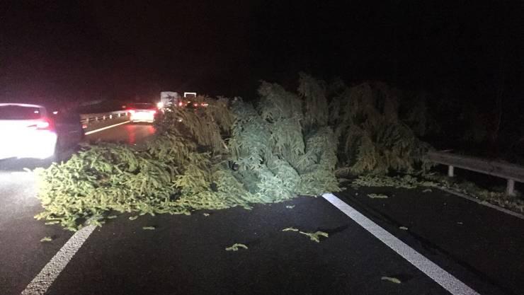Der Baum blockierte den rechten Fahrstreifen während einer Stunde.