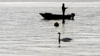 Petri Heil! Der Ständerat spricht sich für die Fischer aus, die Bauern haben das Nachsehen. Walter Bieri/Keystone