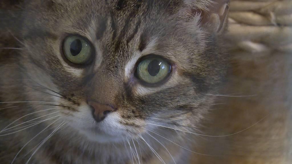 Kurzarbeit und Homeoffice haben Auswirkung auf Tierheime