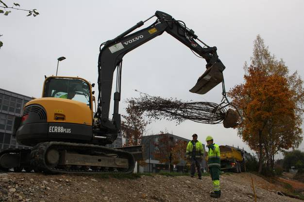 An einem Haken, der an einer Baggerschaufel befestigt ist, werden die Bäume zum Bachbett transportiert.