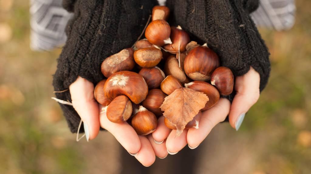 Marroni zum Selbermachen: Das musst du beachten