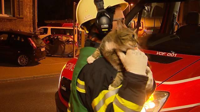 Grossbrand: Feuerwehr rettet 5 Personen und eine Katze