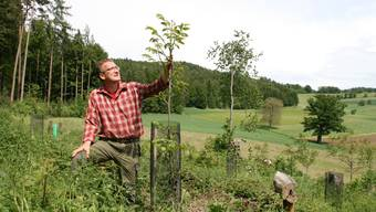 Gemeindeförster Urs Wunderlin ist sichtlich stolz auf seine jungen Nussbäume.