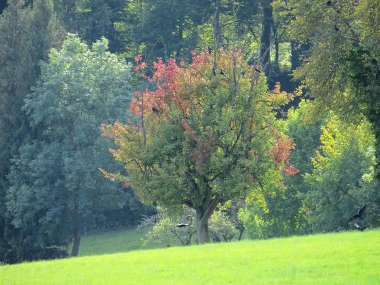 Der Herbst und die Raben
