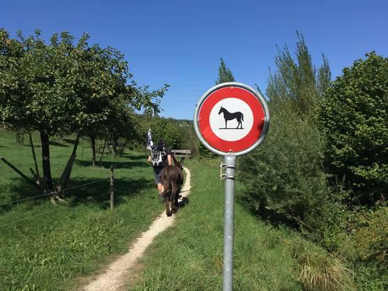 Zum Glück ist Speedy kein Pferd.