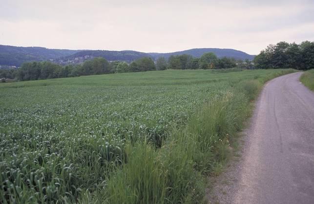 Die Fundstelle vor Grabungsbeginn, Blick gegen Osten. Das Grab lag in der Verlängerung der Strasse (Moosweg), vor den Bäumen im Hintergrund, die den Dorfbach säumen.