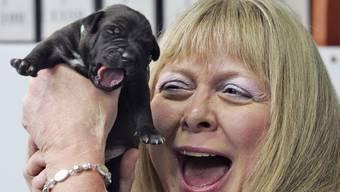 In Südkorea wurden bereits früher Hunde geklont: Hier hält eine US-Amerikanerin 2008 ein Pitbull-Junges im nationalen Uni-Spital in Seoul in die Höhe.