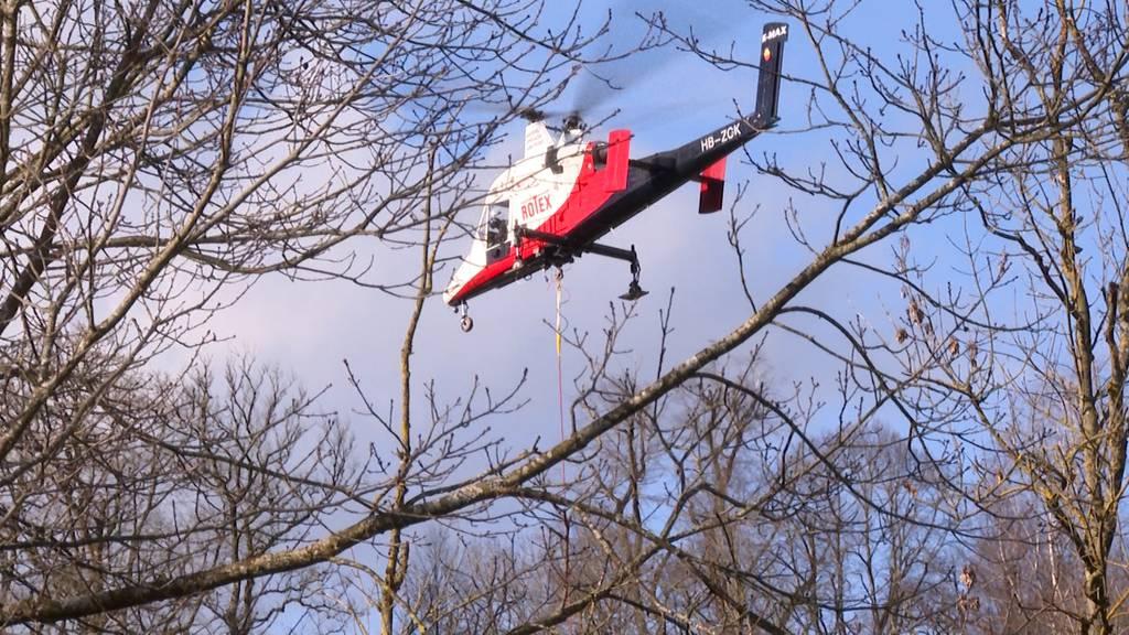 Lorraine-Gebiet: 80 Bäume müssen aus Sicherheitsgründen gefällt werden