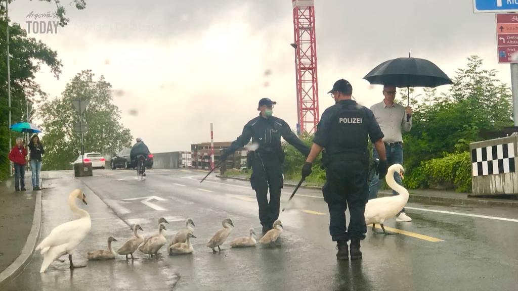 Eine grosse Tierfamilie hält die Aarauer Polizei gehörig auf Trab