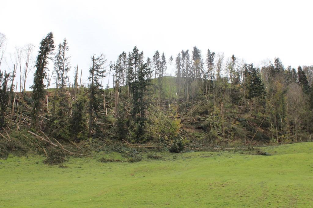 Der Wald hielt nicht stand
