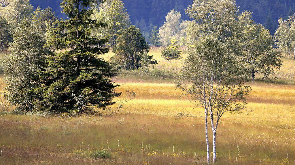 Moorschutz ist nur ein Beispiel, wovon Klima und Biodiversität gleichermassen profitieren. Im Bild: Das Rothenturm-Moor. (Archivbild)