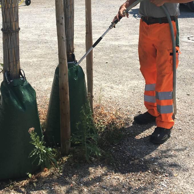 Beitrag Bewässern Aarau