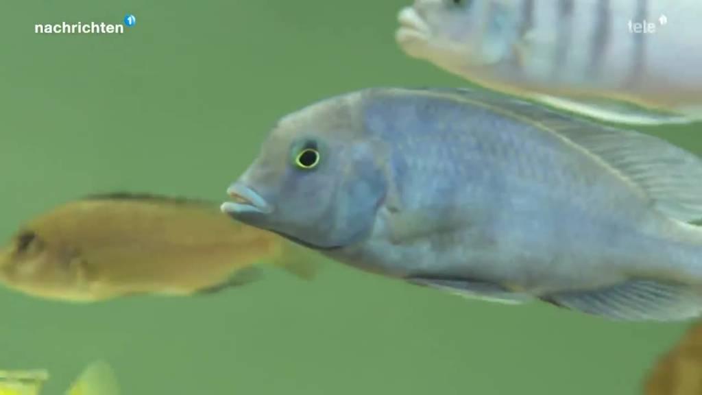 Kampagne gegen leidende Fische in Aquarien