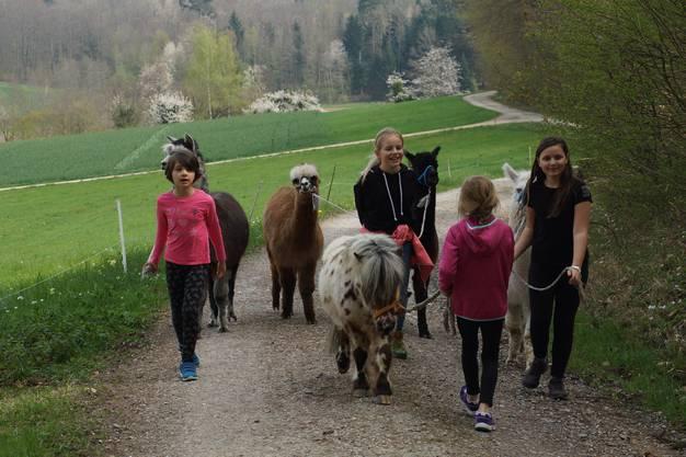 """Der Ferienpass Brugg organisierte den """"Nachmittag mit Alpakas"""" unter der Leitung von Anita Amstad."""