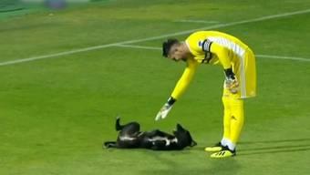 Hund mischt beim Fussball mit – und die Spieler lassen sich erstaunlich gelassen darauf ein.
