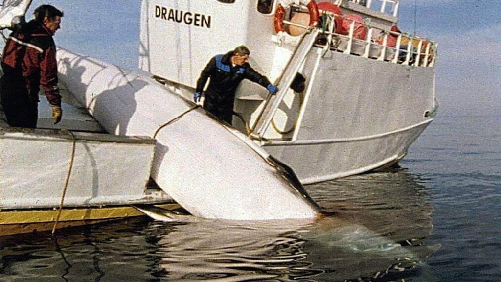 Norwegen startet Walfangsaison