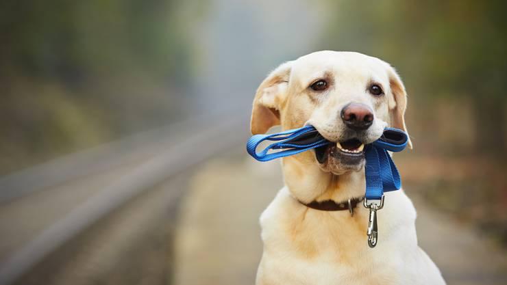 Treuherzige Aufforderung an den Hundehalter: Nimm mich an die Leine.