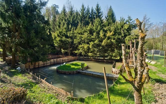 Auf dem Areal der Forellenzucht von Susanne Flückiger befinden sich insgesamt neun Naturweiher, die idyllisch zwischen den Bäumen liegen.