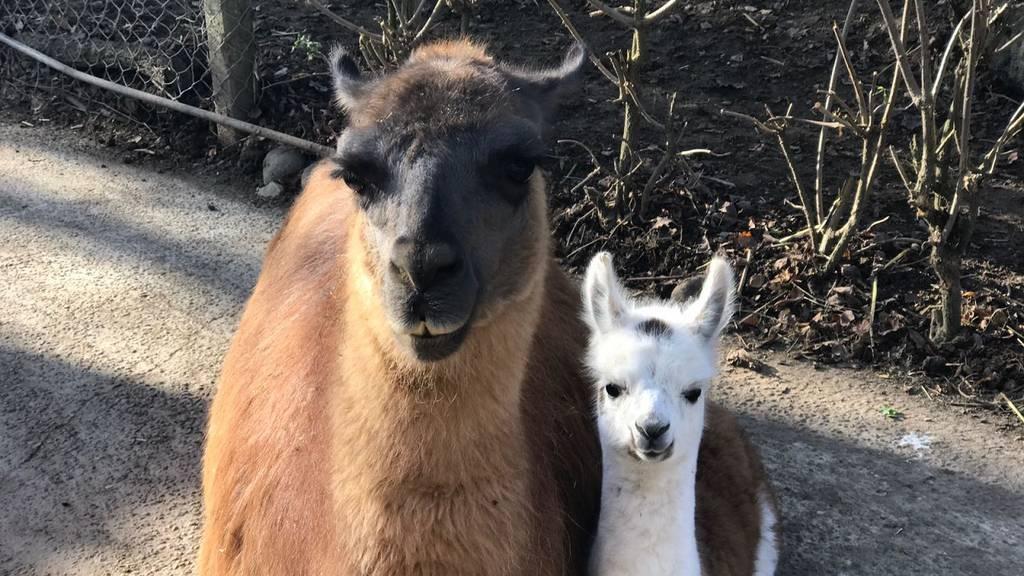 Adoptiere ein Tierli - Unterstütze den Zoo Hasel
