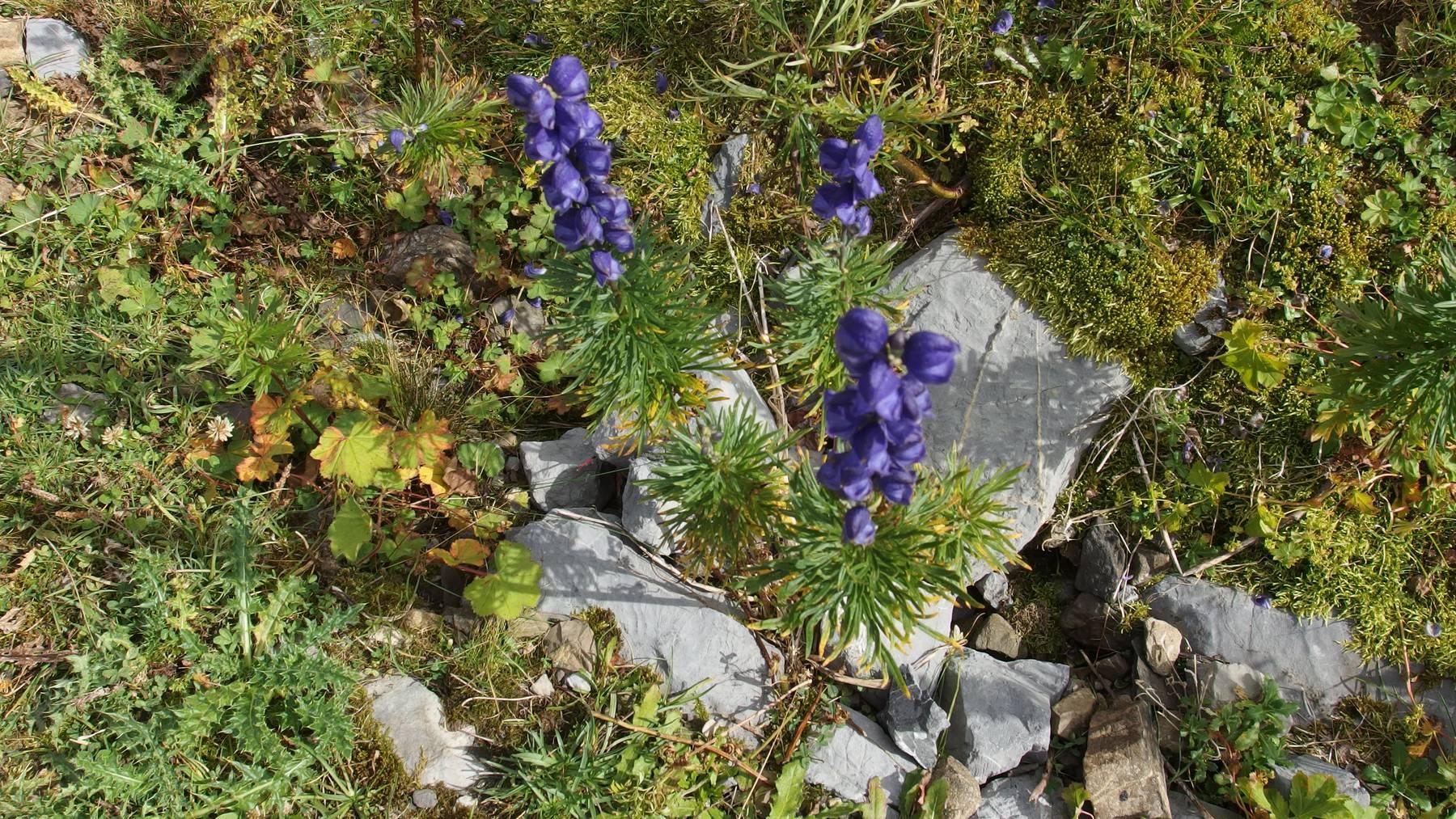 Biodiversität in der Schweiz ist gefährdet