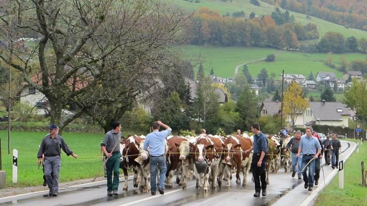 Mit Glocken, Treicheln und Schmuck sind die Kuhherde und Begleiter unterwegs.