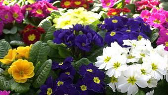 Die Blütezeit beginnt wegen des Temperaturanstiegs früher (Symbolbild)