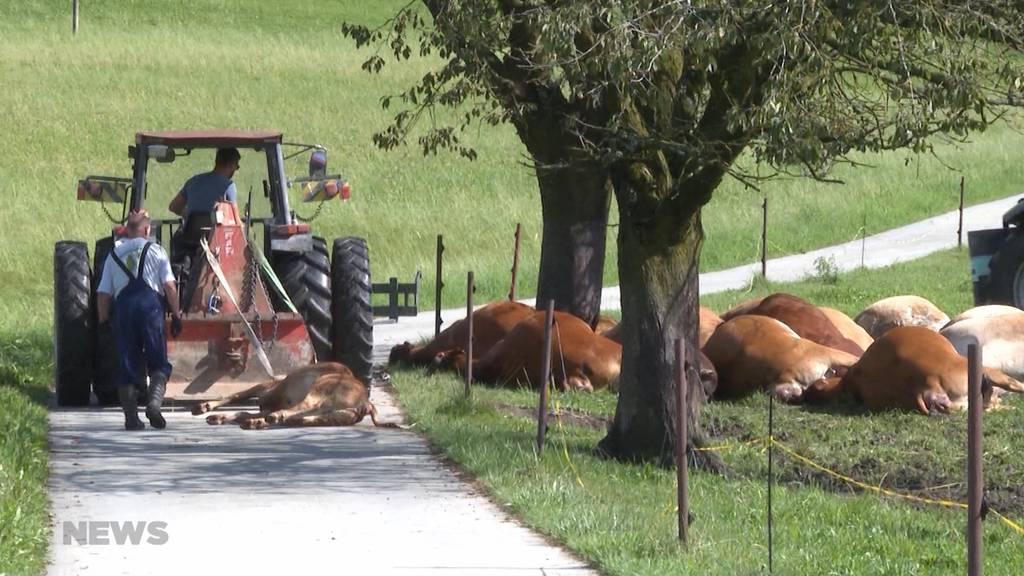 Nach schwerem Unwetter: 19 Kühe tot nach Blitzeinschlag