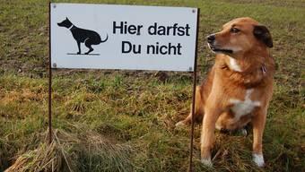 Das Problem liegt nicht bei den Hunden, sondern bei der Ignoranz mancher Besitzer. Sie kümmern sich nicht um Grünlandschutzschilder und auch nicht um die Entsorgung der Häufchen ihrer Tiere.Eddy Schambron