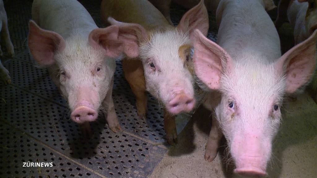 Freud und Leid nach abnehmendem Schweinefleischkonsum