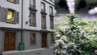Der Freiämter IV-Rentner wurde vor dem Bezirksgericht Bremgarten für den Betrieb einer Indoor-Marihuanaanlage angeklagt. (Montage Symbolbild)