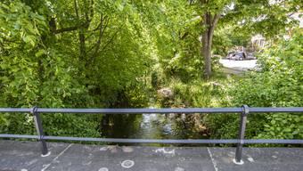 Der Birsig in Biel-Benken ist derzeit überwuchert. Der Kanton möchte den Bach mit Mauern versehen.