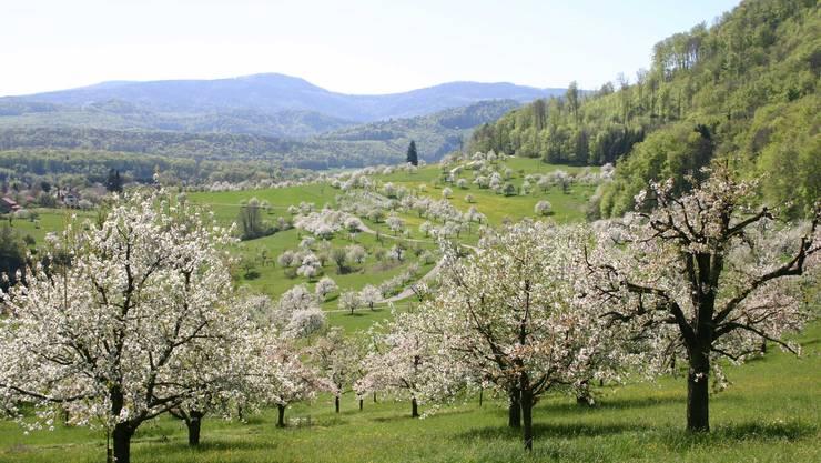 Der Erhalt solcher Natur soll sichergestellt werden: Obstbaumlandschaft im Schwarzbubenland.