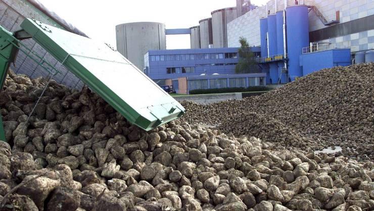 Der Schweiz droht ein Zucker-Engpass. Auch im Ausland sind Zuckerrüben verglichen mit anderen Jahren Mangelware.