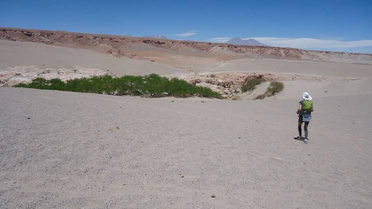 Eine kleine Oase in der Wüste.