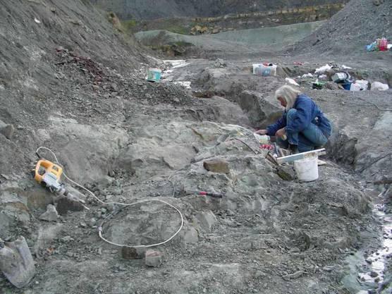Der Paläontologe Ben Pabst bei Ausgrabungen in der Tongrube in Frick