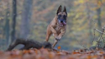 Das Virus ist auch auf Hunde übertragbar. Deshalb sollte man sie impfen.