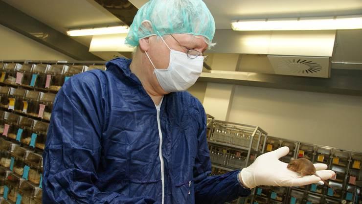 Im Versuchslabor des Basler Entwicklungsbiologen Rolf Zeller leben etwa 2000 Mäuse. Er lässt das Radio für sie laufen: «Die Musik beruhigt sie.» (Andreas Maurer)