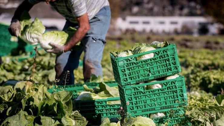 «Mit neuen Handelsabkommen eröffnen sich auch für die Schweizer Landwirtschaft neue Exportchancen», schreibt Elisabeth Schneider-Schneiter.