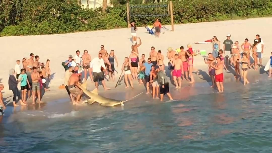 Die mutige Befreiungsaktion am Strand von Naples, Florida.