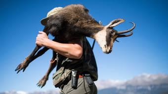 Ein Jäger bei Nax im Unterwallis mit einer Gämse auf dem Rücken. Nach dem zahlreichen Fallwild im vergangenen Winter wird in der Jagdsaison 2018 die Abschussquote gesenkt. (Archiv)