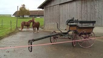 Letze Woche verunfallte im Bezirk Bremgarten eine 59-Jährige mit einer Kutsche schwer. Freunde des Opfers suchen nun nach ihrem Retter.