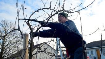 Obst- und Gartenbauverein 2020
