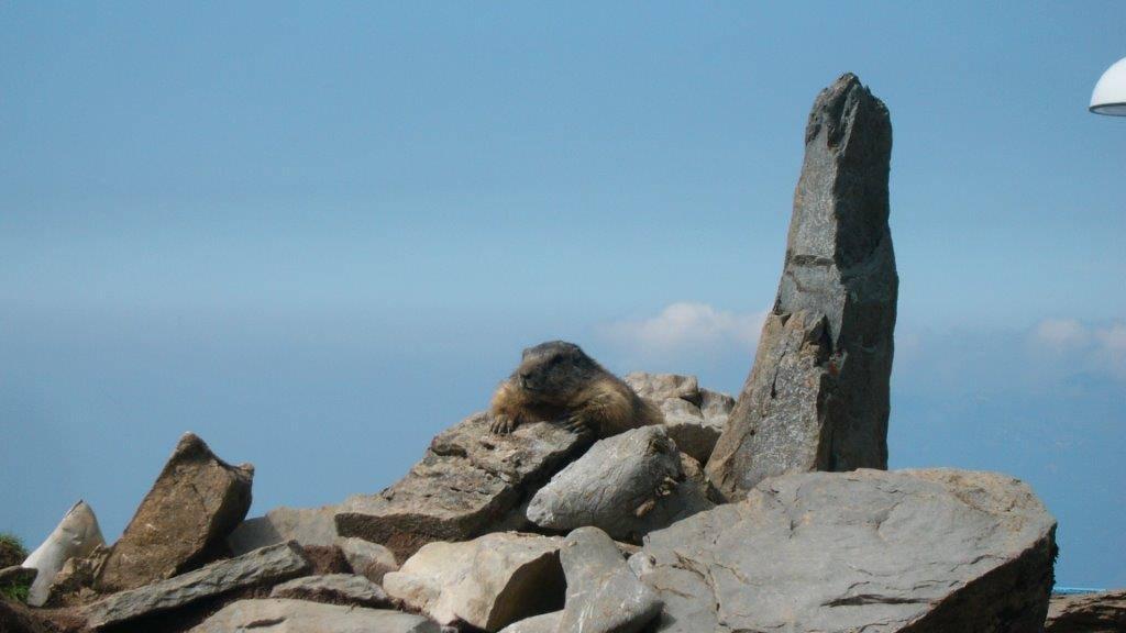 Freizeittipp: Alpenwanderung Klewenalp-Isenthal