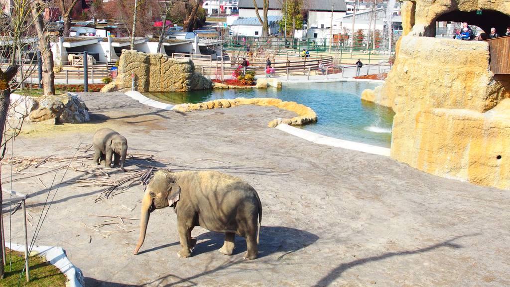 Freizeittipp: Neuer Elefantenpark im Kinderzoo