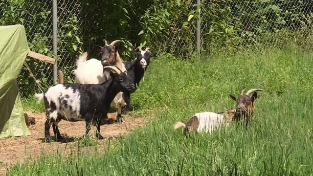 Gewalttätiger Bauer entführt Tiere