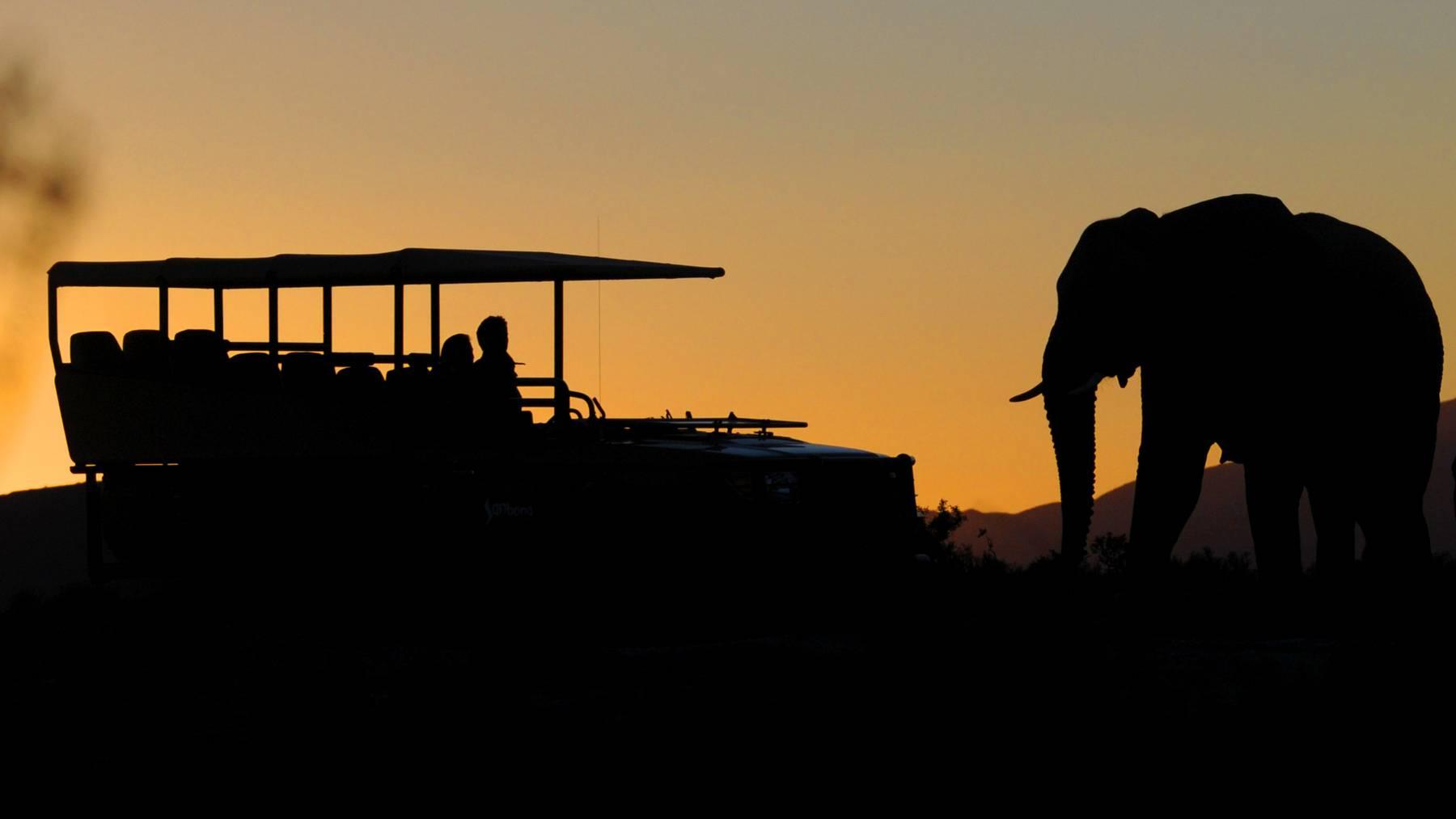 36 Grad Südafrika Safari