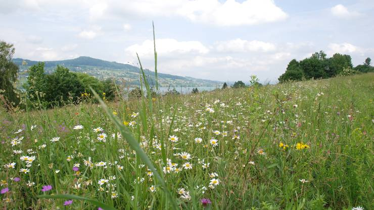 Wer achtlos durch eine Blumenwiese läuft, kann viele Lebensräume zerstören.